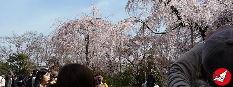 AR-Arashiyama4